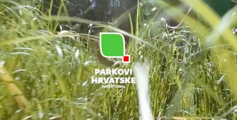 Read more about the article Izviđački virtualni izleti