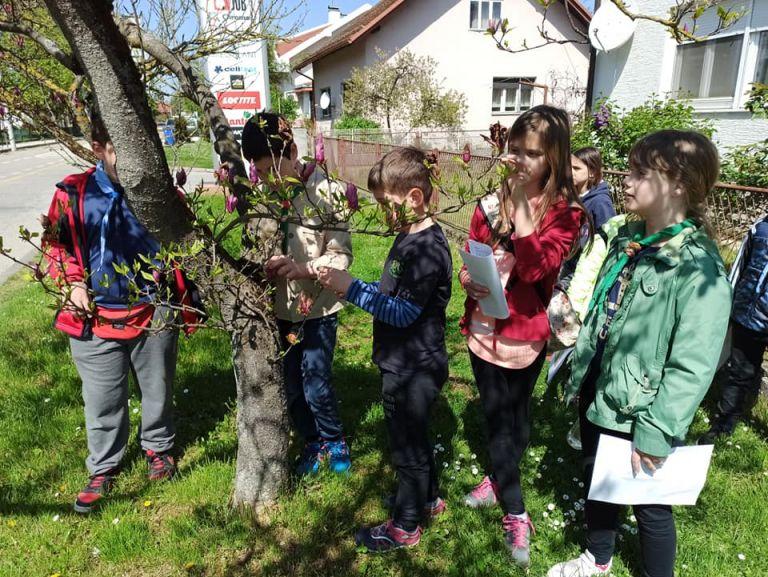 Read more about the article Upoznali smo bilje u svom susjedstvu